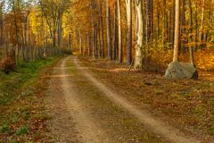 Forest path in autumn colors in the Tricity Landscape Park, Gdan. Sk, Poland Stock Images
