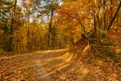 Forest path in autumn colors in the Tricity Landscape Park, Gdan. Sk, Poland Stock Photos