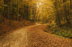 Forest path in autumn. Dreamy forest path in autumn golden colors Stock Image
