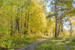 Forest Path. Autumn, Early autumn, Forest, Forest Path, Grove, Leaves, Leaves of the trees, Path In The Woods, Rays of sunlight, Sunlight, Sunlight in the Stock Photos