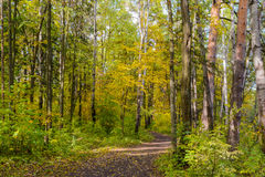 Forest Path. Autumn, Early autumn, Forest, Forest Path, Grove, Leaves, Leaves of the trees, Path In The Woods, Rays of sunlight, Sunlight, Sunlight in the Royalty Free Stock Photos