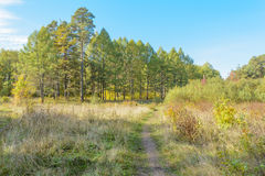 Forest Path. Autumn, Early autumn, Forest, Forest Path, Grove, Path In The Woods, Pine tree, Pines, Trees Stock Photo