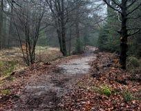Forest path. In autumn. Foto taken in beesterzwaag in drachten Royalty Free Stock Photos