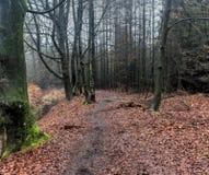 Forest path. In autumn. Foto taken in beesterzwaag in drachten Stock Photos