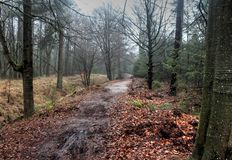 Forest path. In autumn. Foto taken in beesterzwaag in drachten Stock Image