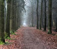 Forest path. In autumn. Foto taken in beesterzwaag in drachten Royalty Free Stock Photo