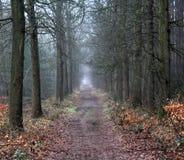 Forest path. In autumn. Foto taken in beesterzwaag in drachten Stock Photo