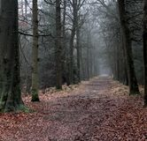 Forest path. In autumn. Foto taken in beesterzwaag in drachten Royalty Free Stock Image