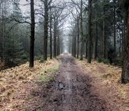 Forest path. In autumn. Foto taken in beesterzwaag in drachten Royalty Free Stock Photography