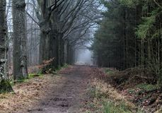 Forest path. In autumn. Foto taken in beesterzwaag in drachten Royalty Free Stock Images