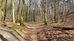 Forest path. In autumn. Foto taken in Doorwerth in Wageningen Royalty Free Stock Photography