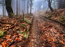 Forest path. Autumn misty morning in the middle of forests Stock Photography