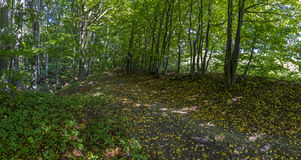 Forest path in autumn Royalty Free Stock Images