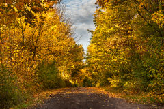 Forest path in autumn scenery Stock Photo