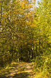Forest path at autumn sunny day in Djerdap national park. East Serbia Royalty Free Stock Photography