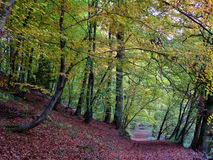 Forest and path in autumn time Royalty Free Stock Photo