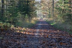 Forest path with autumn trees in the Loenermark Stock Photography