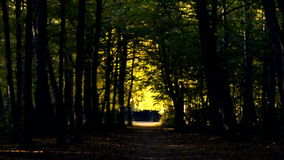 Forest path in the autumn.Walk in the autumn park on nature. stock footage