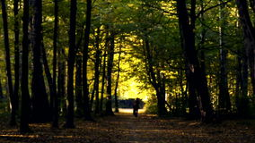 Forest path in the autumn.Walk in the autumn park on nature. stock video