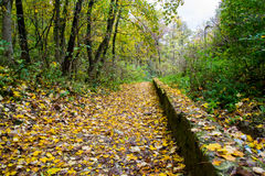 Forest path. Autumn forest walking path with green trees on sides and yellow leaves on the ground Stock Images