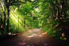 Forest path. Beautiful forest path in National Park Fruska Gora. Beautiful forest path in National Park Fruska Gora in Serbia. Sun rays of light in spring forest stock image