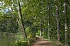 Forest path with beeches in autumn, Lower Saxony, Germany Stock Photos