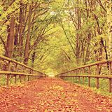 Forest path bellow green yellow trees. Fall afternoon in forest after rain Stock Photo