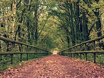 Forest path bellow green yellow trees. Fall afternoon in forest after rain Royalty Free Stock Photo