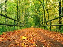 Forest path bellow green yellow trees. Fall afternoon in forest after rain Stock Images