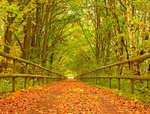 Forest path bellow green yellow trees. Fall afternoon in forest after rain Stock Photos