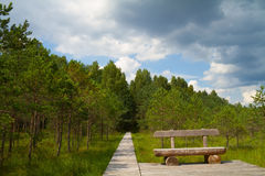 Forest path, a bench Stock Photos