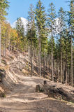 Forest path in Beskid Mountains Stock Images