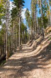 Forest path in Beskid Mountains Stock Photo