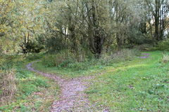Forest path bifurcation Royalty Free Stock Image