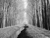 Forest path black and white Royalty Free Stock Images