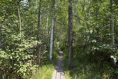 Wooden path in the forest Stock Photos