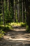 Forest Path, Broken Sunlight. A path through a forest in Wyoming on a summers day Stock Image