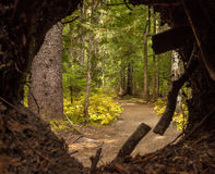 Forest path through a circular opening Royalty Free Stock Image
