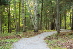 Forest path color leaves during fall season with sunshine Royalty Free Stock Photo