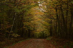 Forest. Path in a colorful autumn forest Stock Image
