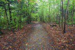 Forest Path con las hojas caidas en Nueva Inglaterra fotos de archivo libres de regalías