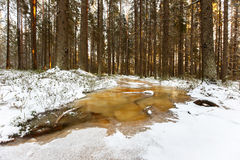 Forest path converted into frozen brook Royalty Free Stock Images