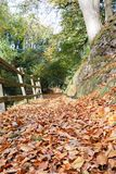 Forest path covered in fallen autumn leaves. Low angle view of forest path covered in fallen autumn leaves Royalty Free Stock Images