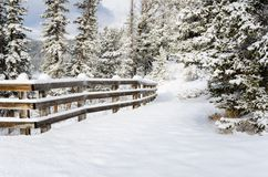 Forest Path Covered in Fresh Snow on a Sunny Winter Day Stock Photo