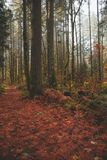Forest path covered in leaves royalty free stock photo