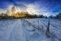 Forest path covered with snow at sunrise Stock Images
