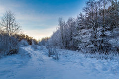 Forest path covered with snow at sunrise Stock Photos