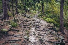 Stolowe Mountains in Poland. Forest path covered with tree roots on Mount Naroznik in Table Mountains, Sudetes in Poland Royalty Free Stock Photo