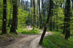 Forest Path. Curvy Path Winding through Spring Forest with Fresh Green Leaves Stock Photo