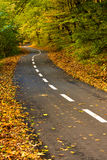 Forest path for cyclists in autumn. Newly built road in colorful autumn forest stock photos